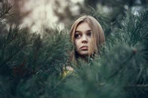 Hintergrundbilder Dunkelbraun Ast Kopf Mädchens