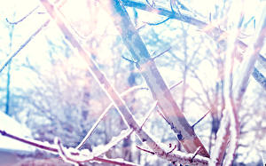 Fotos Winter Ast Schnee Natur