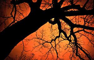 Hintergrundbilder Bäume Ast Baumstamm Silhouette Untersicht Ansicht von unten Natur
