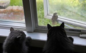 Hintergrundbilder Katze Vogel Sperlinge Fenster Tiere