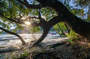 Fotos Neuseeland See Bäume Lichtstrahl Ast Natur