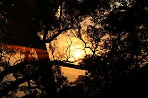 Fotos Sonnenaufgänge und Sonnenuntergänge Bäume Lichtstrahl Ast Natur