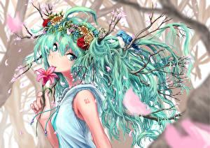 Bilder Vocaloid Hatsune Miku Haar Anime Mädchens