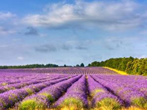 Bilder Acker Lavendel Himmel Landschaftsfotografie Provence Natur