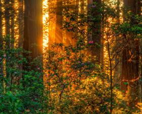 Bilder Wälder Baumstamm Ast Lichtstrahl Natur