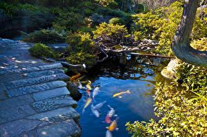 壁纸、、日本、庭園、池、魚類、Japanese garden Nagasaki、自然