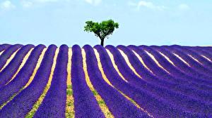 Hintergrundbilder Acker Lavendel Landschaftsfotografie Bäume Natur