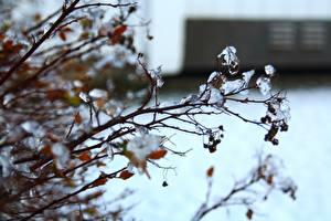 Fotos Ast Eis Natur
