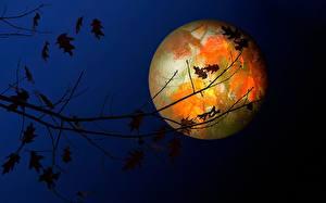 Bilder Himmel Nacht Ast Mond Natur