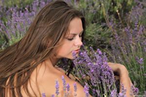 Bilder Lavendel Braune Haare Haar Elena May, Kloffina A, Tessa junge frau