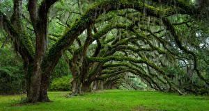 Hintergrundbilder Vereinigte Staaten Frühling Bäume Ast Laubmoose Charleston South Carolina Natur