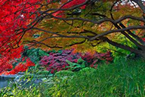 壁纸、、日本、庭園、木、草、自然