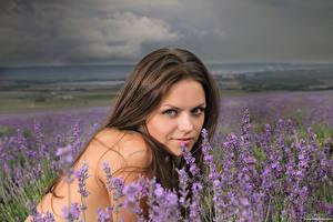 Bilder Lavendel Braunhaarige Starren Elena May, Kloffina A, Tessa Mädchens