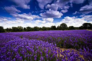Bilder Landschaftsfotografie Felder Lavendel Himmel Wolke Natur