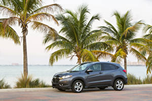 Hintergrundbilder Honda Palmen Graue 2016 HR-V Autos Natur