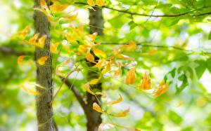 Bilder Sommer Blattwerk Ast Natur