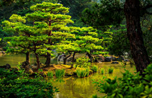Photo Japan Gardens Pond Kyoto Trees Nature