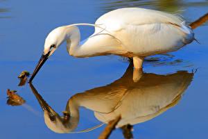 Fotos Reiher Vogel Wasser