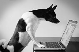 Images Dogs Laptops animal