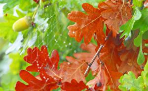 Bilder Herbst Hautnah Blatt Blattwerk Spinnennetz