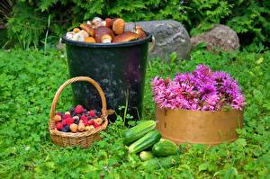 Fotos Sommer Pilze Himbeeren Gurke Kornblume Weidenkorb Gras Lebensmittel Blumen
