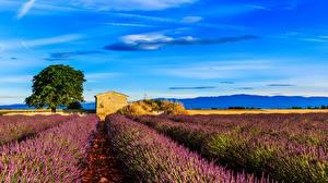 Fotos Frankreich Acker Lavendel Himmel Landschaftsfotografie Provence Natur