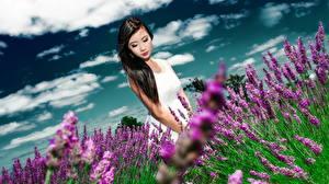 Bilder Asiatisches Acker Lavendel Wolke junge frau Blumen