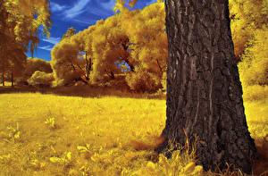 Bilder Herbst Rinde Gras Baumstamm Natur