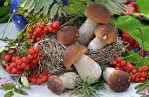 Fotos Pilze Natur Beere Mehlbeeren