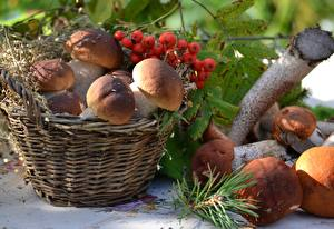 Pictures Mushrooms nature Berry Rowan Wicker basket Nature