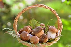 Hintergrundbilder Pilze Weidenkorb Lebensmittel