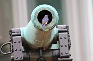 Fotos Kanone Vögel Tiere Heer