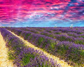 Fotos Acker Lavendel Wolke Natur