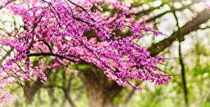 Bilder Frühling Blühende Bäume Ast Natur