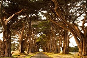 Hintergrundbilder Wege Bäume Ast Natur