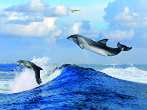 Picture Waves Sky Dolphins 2 Animals