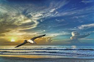Photo Seagulls Sea Birds Sky Clouds Nature Animals