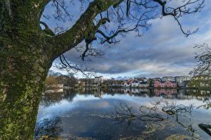 Images Norway Lake Trunk tree Moss Breiavatnet Rogaland Stavanger Cities