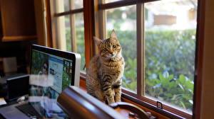 Hintergrundbilder Katze Fenster ein Tier