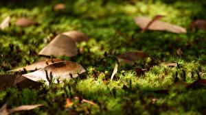 Image Closeup Foliage Moss Nature
