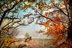 Fotos Herbst Park Bank (Möbel) Nebel Ast Natur