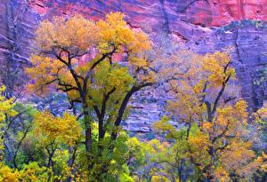 Bilder USA Herbst Park Zion-Nationalpark Felsen Utah