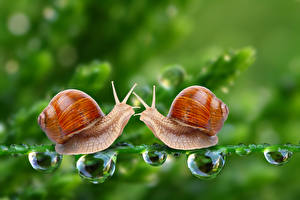 Pictures Snails 2 Drops Animals