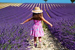 Fotos Acker Lavendel Kleine Mädchen Der Hut Kleid kind Natur