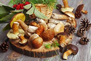 Bilder Pilze Natur Zapfen Natur