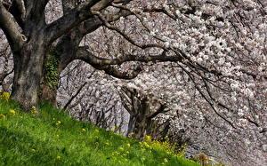 Hintergrundbilder Blühende Bäume Frühling Bäume Ast Malus Natur