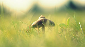 Fotos Pilze Natur Gras