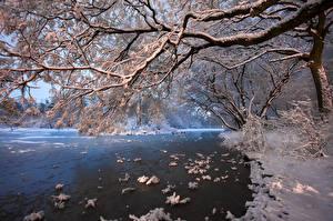 Hintergrundbilder Flusse Bäume Schnee Ast Natur