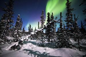 Image USA Sky Alaska Aurora Snow Trees Denali National Park Nature