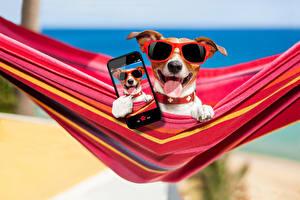 Images Dog Jack Russell terrier Glasses Smartphone Selfie Funny Animals